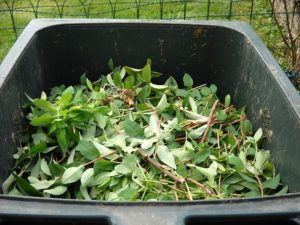 beginner guide to composting
