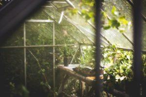 greenhouse misting